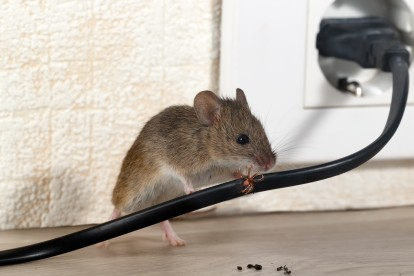 Pest Control in Ealing, W5. Call Now! 020 8166 9746