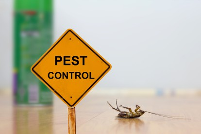 Pest Contol in Ealing, W5. Call Now 020 8166 9746