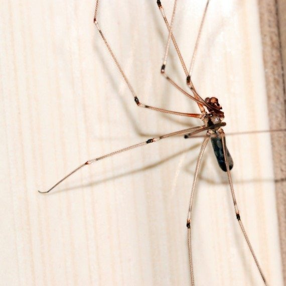 Spiders, Pest Control in Ealing, W5. Call Now! 020 8166 9746